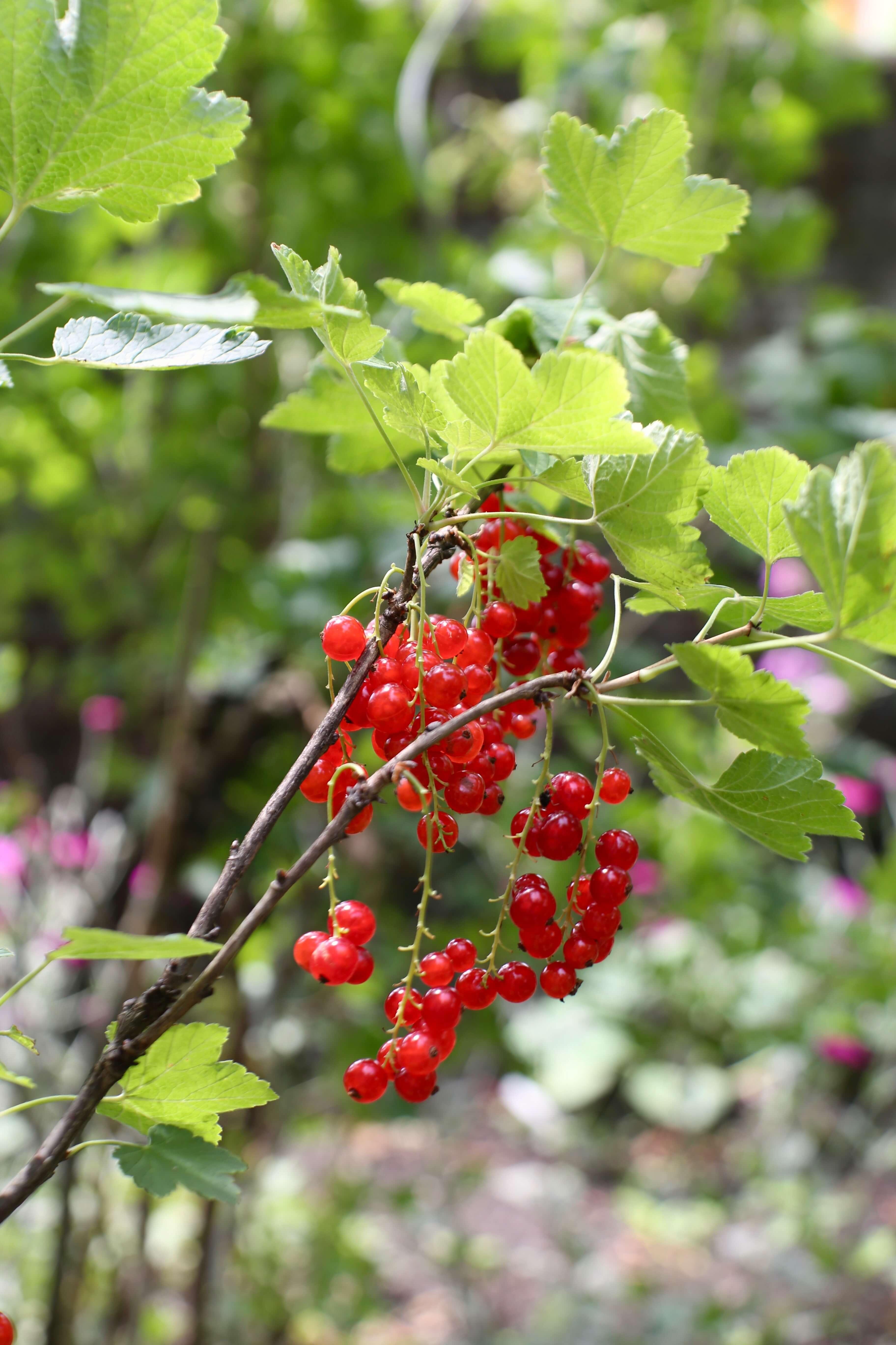 Sommerliche Waffeltorte mit Beeren & Mascarponecreme | Rezept